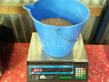 Weighing the grain